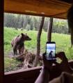 Observare ursi in Sinca Noua